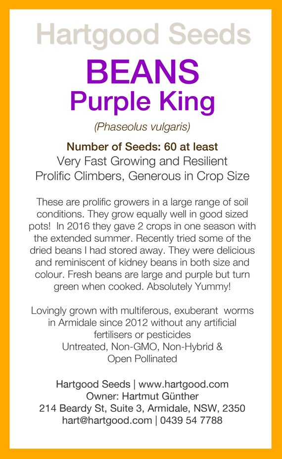purple-king-seeds