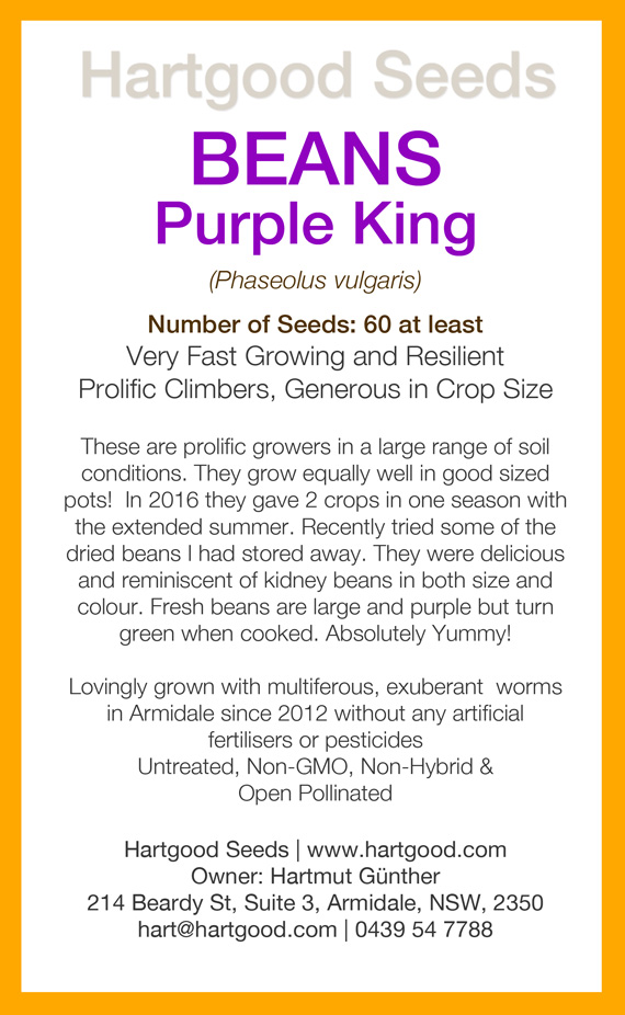 purple-king-seeds