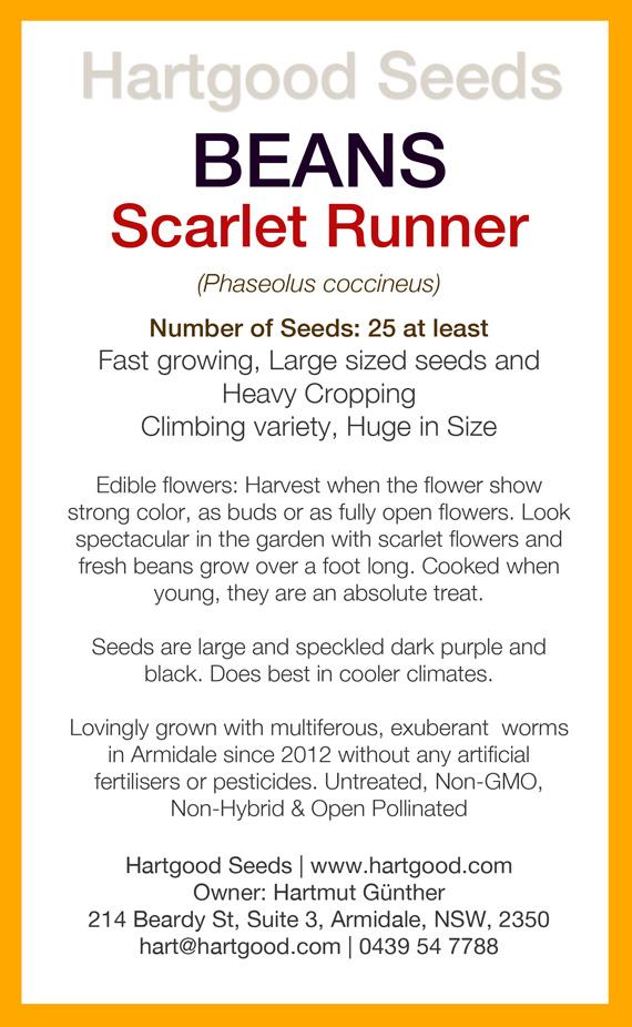 scarlet-runner-bean-seed